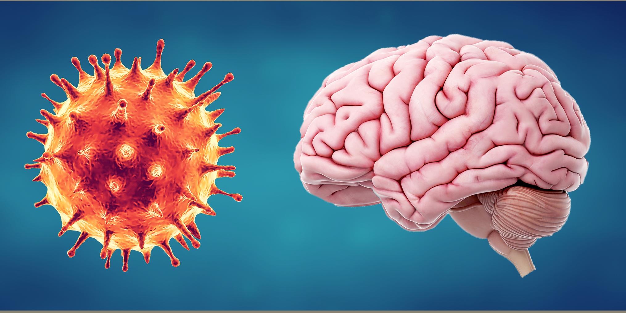 covid and brain